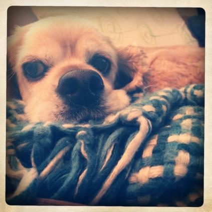 Fiona snuggled in