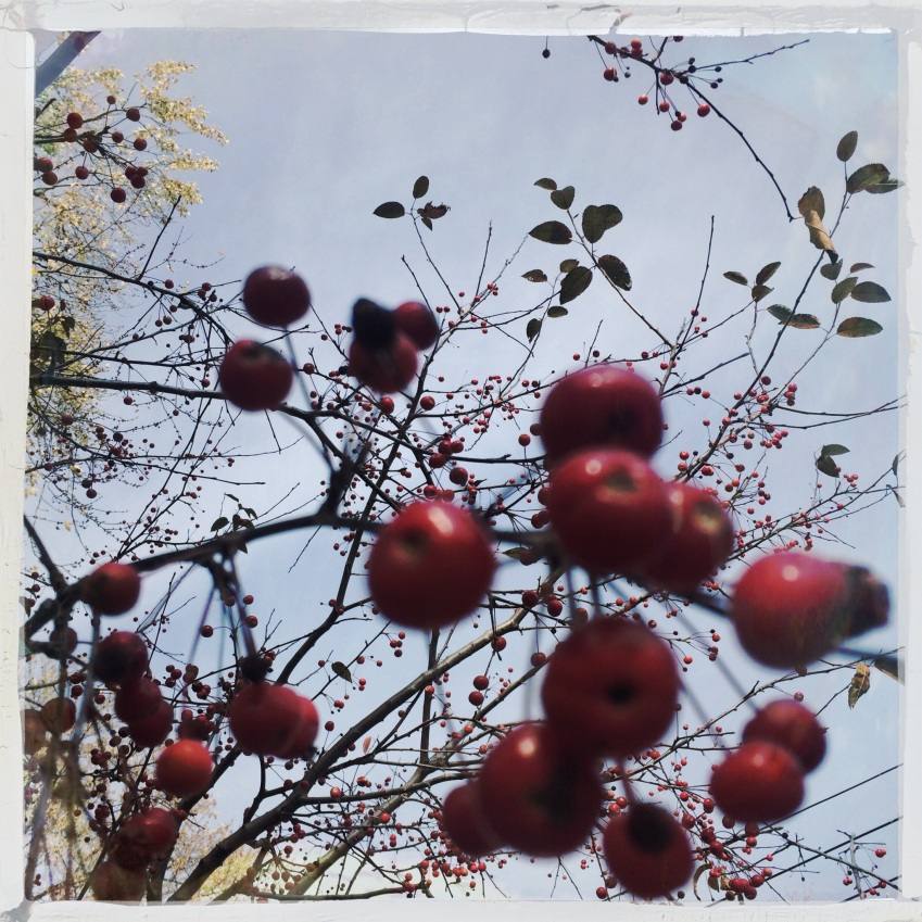 our cranberry tree