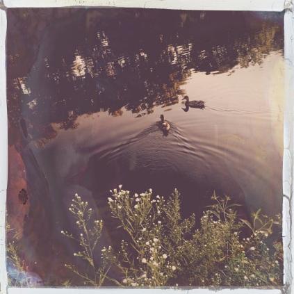 Our little neighborhood duck pond