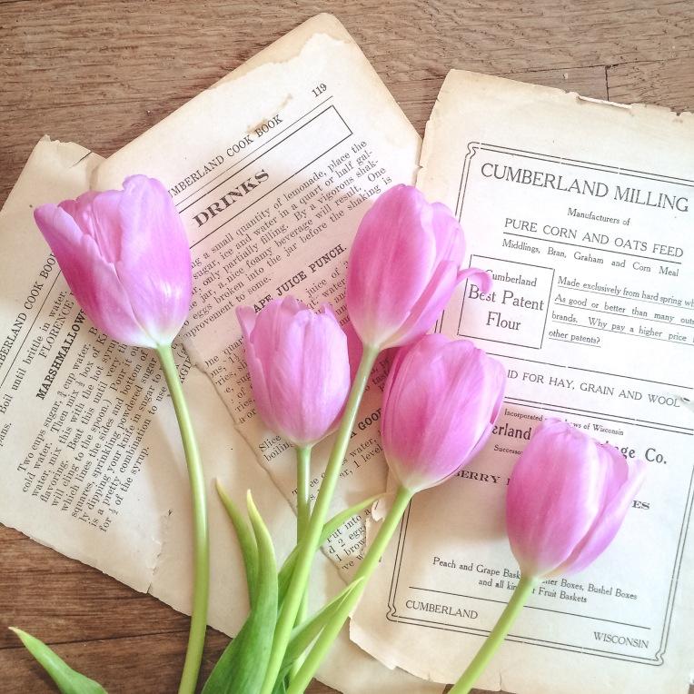 gfancy_pinktulips_clndckbk_ss7
