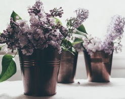 gfancy_lilacs_sunlight