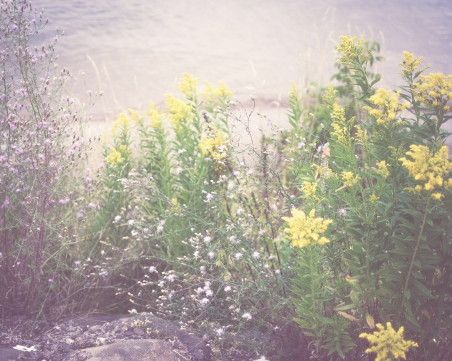 gfancy_bayfield_yellowflowers_action