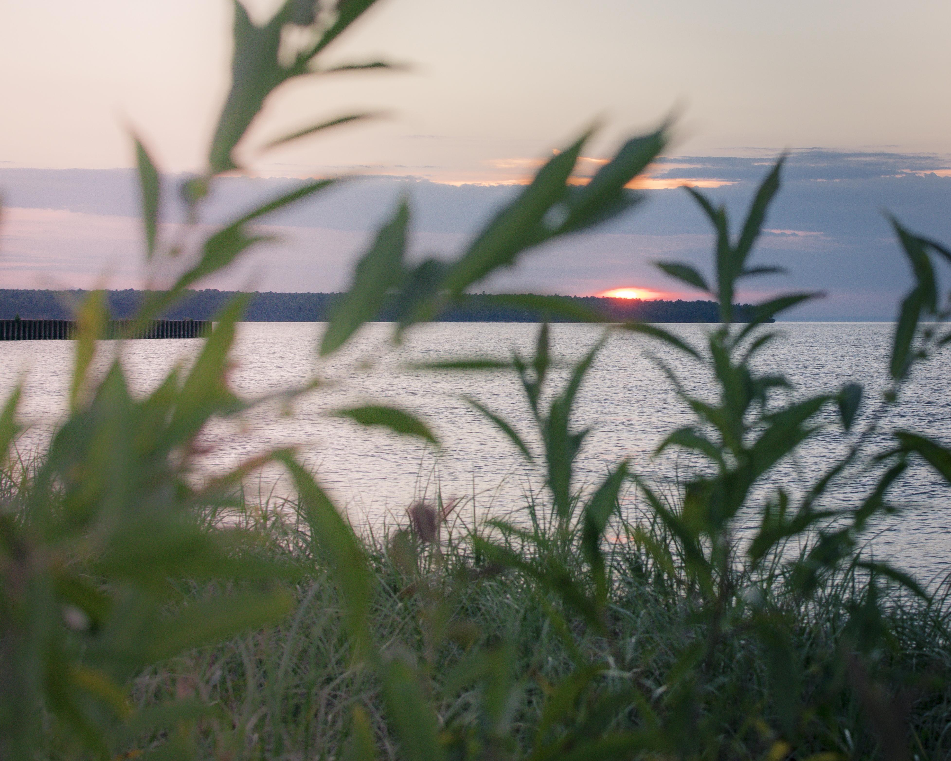 gfancy_corny_sunset_throughgrass