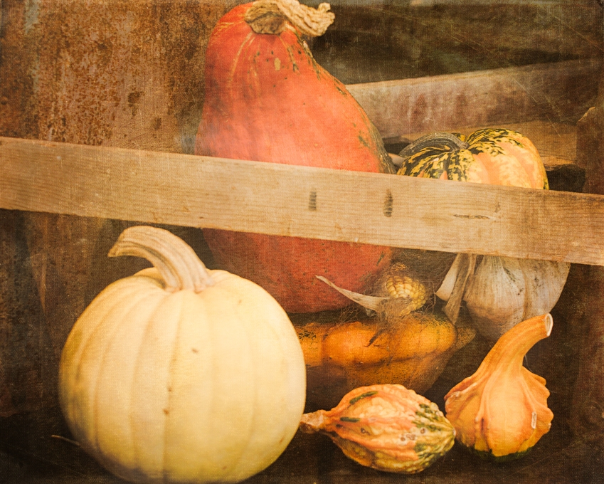 gfancy_arb_pumpkins_harmony14