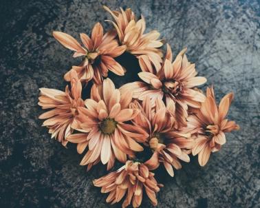 gfancy_daisies_pizzapan