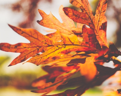 gfancy_leaves_action