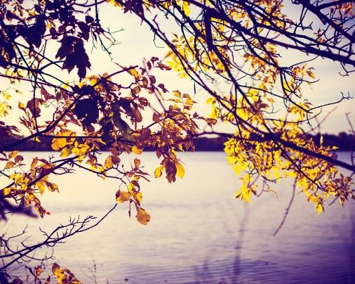 gfancy_leaves_framing_psaction