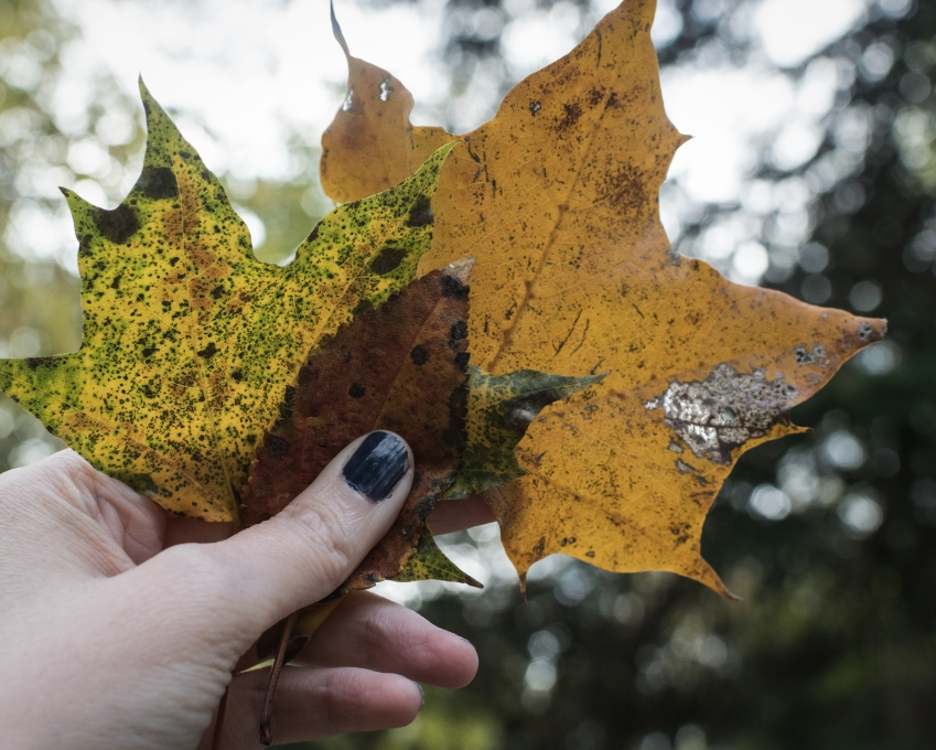 gfancy_leaves_kkcaramel