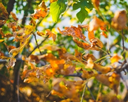 gfancy_leaves_smuse4