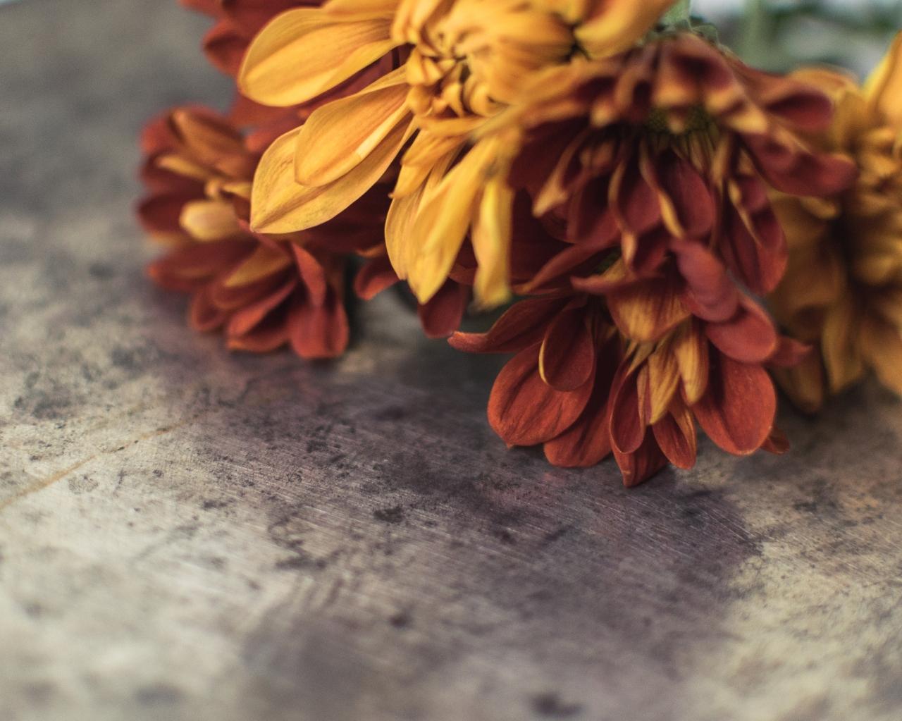 gfancy_fall-flowers_true