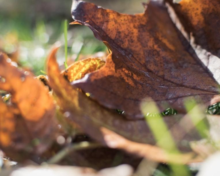 gfancy_leaves_bokeh-kkcaramel
