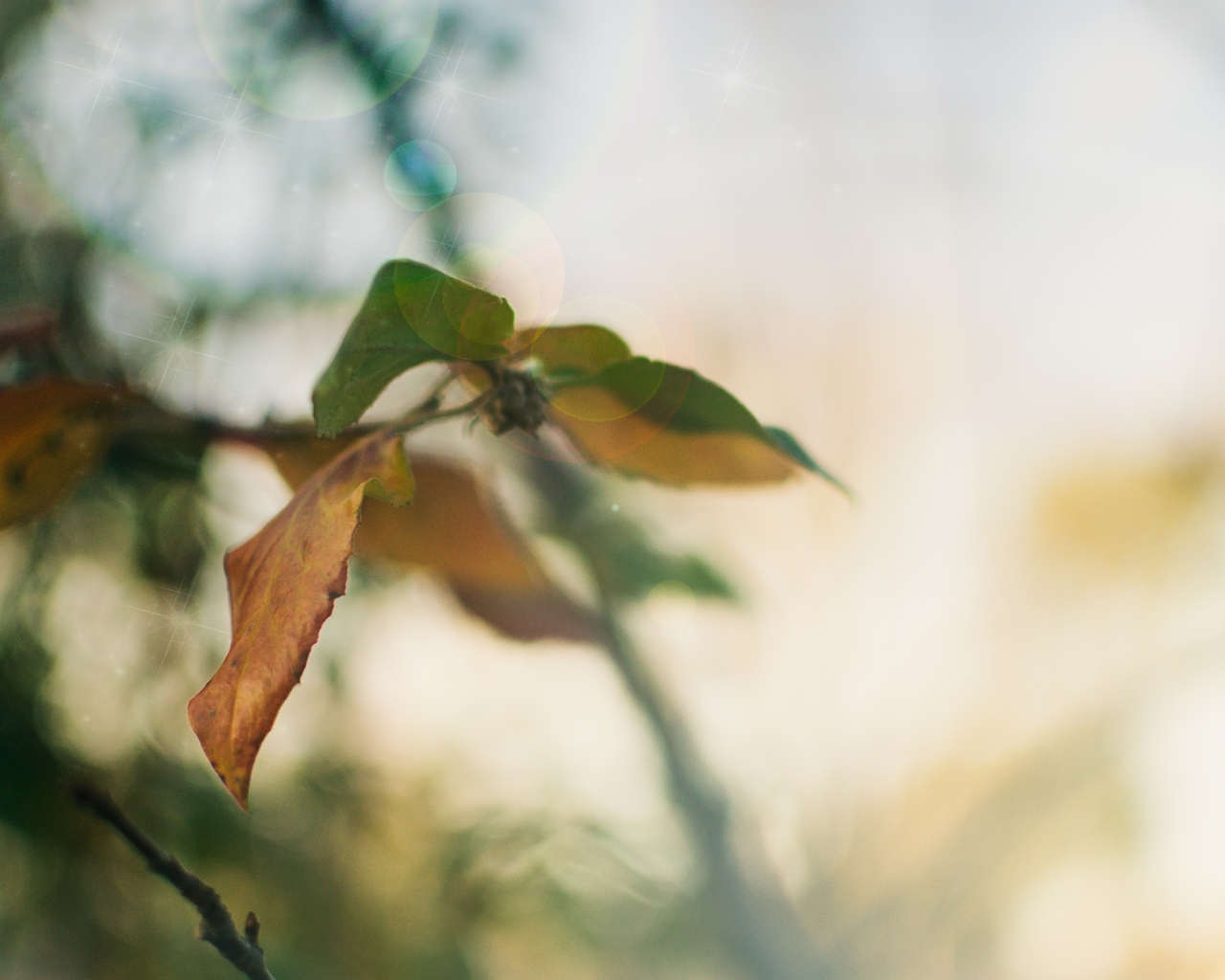 gfancy_hazy-leaves_light-flare