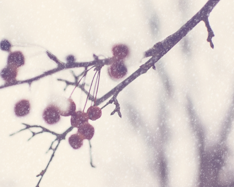gfancy_snow_crabapples_winteraction