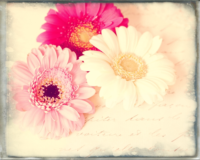 btl_3gerberas_french_frame