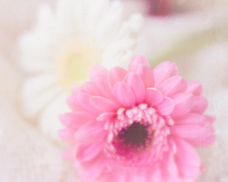 btl_gerber.pink.white_wax