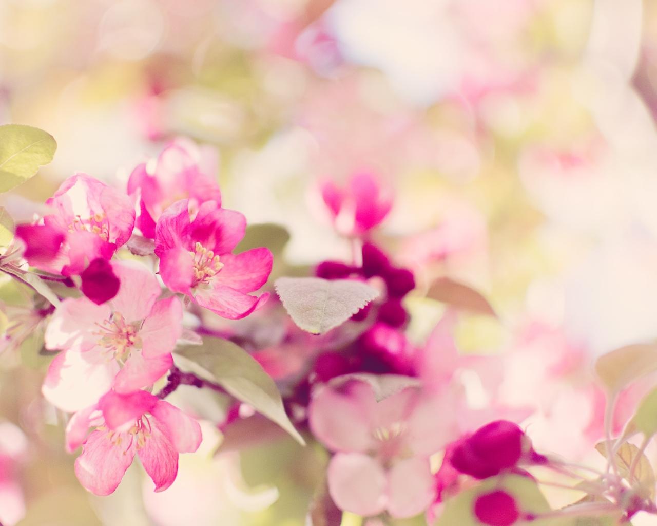 btl_blossom_pink.bokeh.jpg