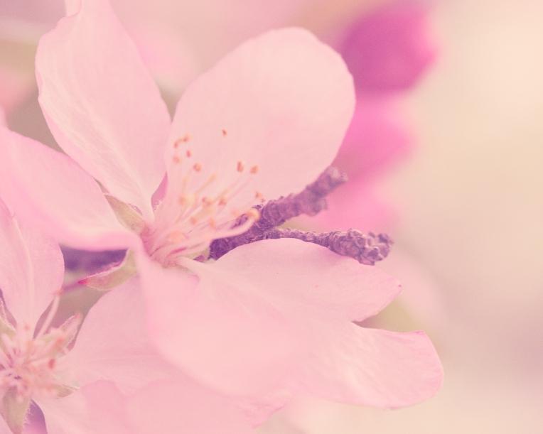 btl_blossoms_pink.dkpink