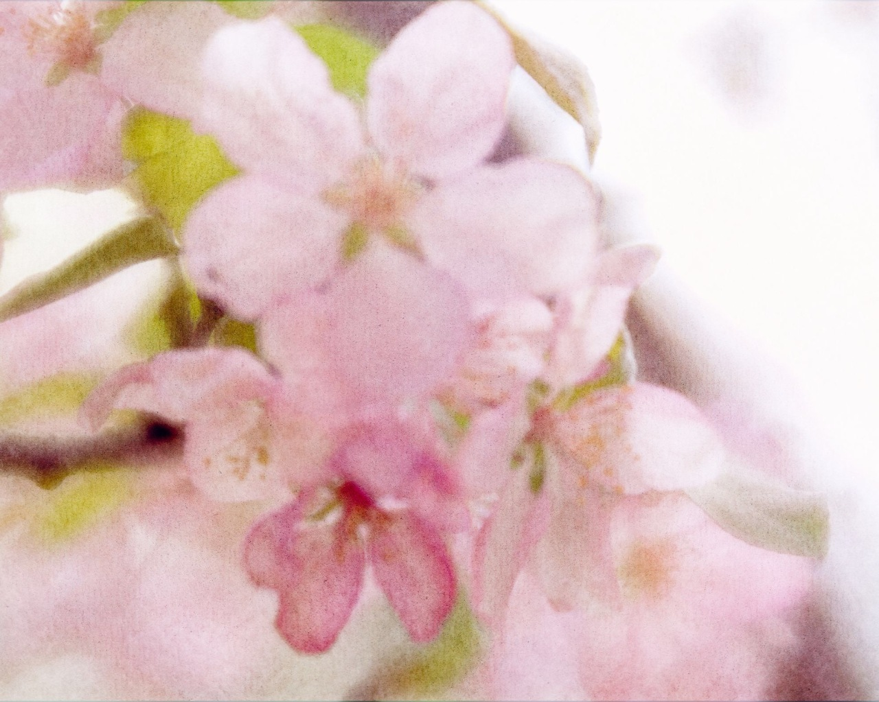 btl_blossoms_watercolor.midsuumer