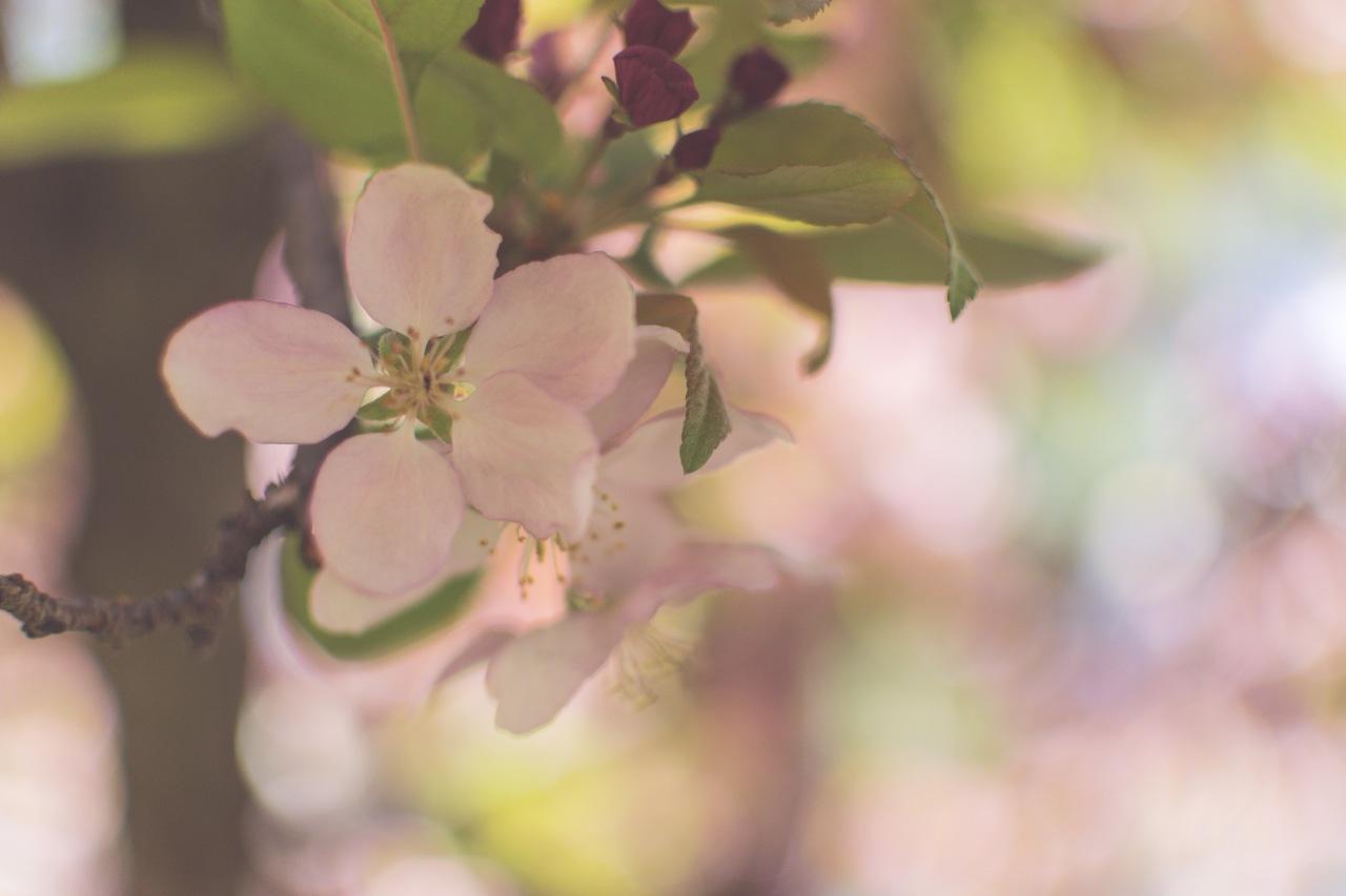 gfancy_blossoms_bokeh_carousel