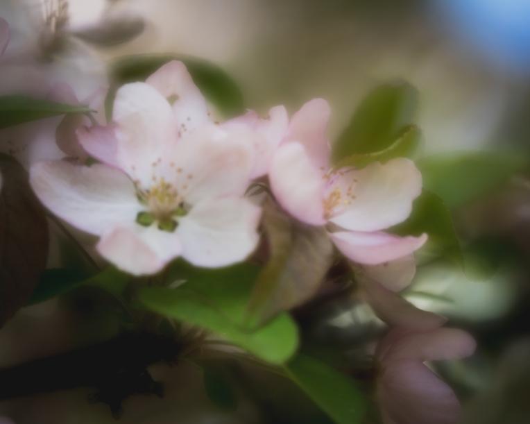 gfancy_blossoms_retro24