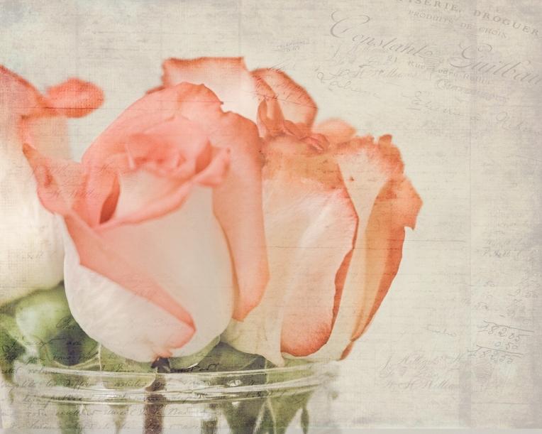 gfancy_coral.roses_fr.brocade