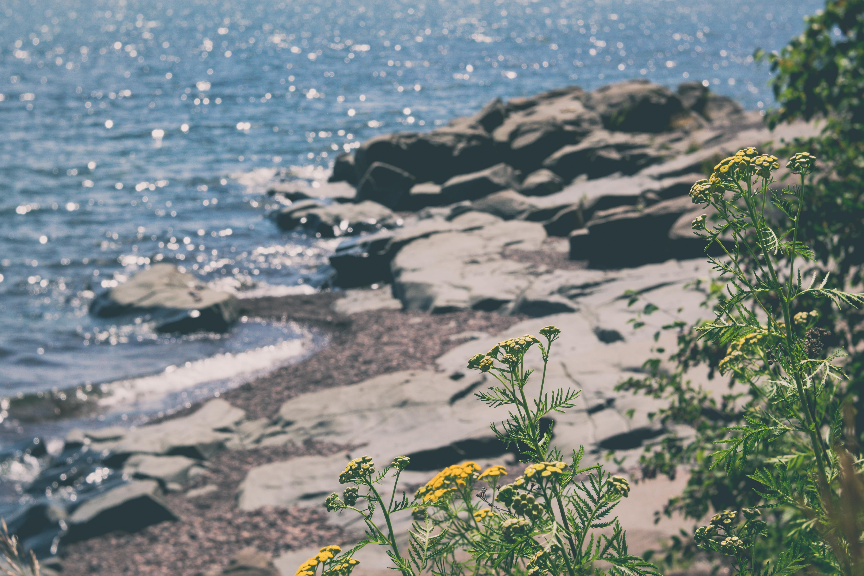 gfancy_duluth_brighton.beach_fairy1